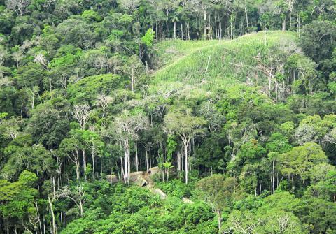 브라질 아크리(Acre)주의 열대우림. 삼림 속에 살고 있는 비접촉 부족민들 가옥이 보인다. Credit: Wikimedia Commons / Gleilson Miranda / Governo do Acre