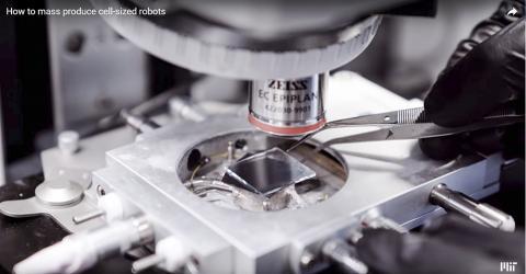 작업 과정을 현미경으로 확인하는 모습. 동영상 캡처. ⓒ MIT