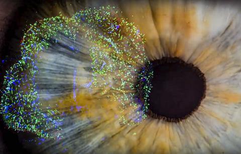 미국 존스홉킨스대 연구팀은 인간의 망막 조직을 성장시켜 어떻게 물체를 컬러로 보는지를 확인했다.  CREDIT: Len Turner and Dave Schmelick/JHU