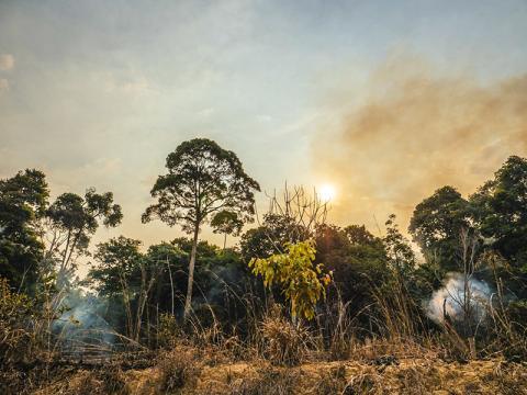 2015년에 발생한 엘니뇨 현상에 따라 중앙 아마존 열대우림 100만 헥타르에 복합적인 산불이 일어났다. 이 산불은 미국 캘리포니아 멘도시노 산불의 다섯 배나 더 넓은 면적에 영향을 끼쳤는데도 브라질 국내에서나 국제사회 언론의 큰 주목을 받지 못 했다.  CREDIT: Adam Ronan