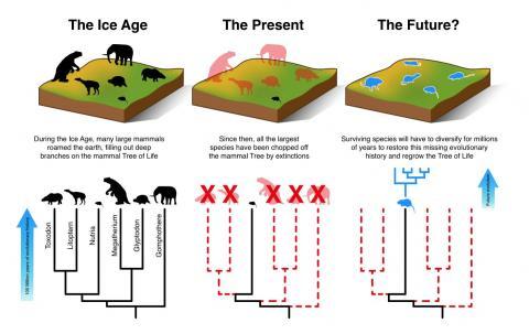오후스 대학 연구팀이 작성한 과거, 현재, 미래를 포괄한 포유류 진화도. 현재 심각한 멸종이 진행되고 있으며, 종 보존을 위한 인류의 적극적인 노력이 요구되고 있ㄷ.   ⓒMatt Davis, Aarhus University