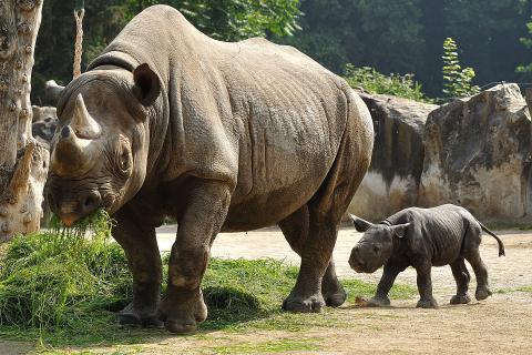 지구상에 상고 있는 포유류의 멸종 속도가 급속히 빨라지고 있으며, 지난 50년간 무너진 생물다양성을 살리기 위해 300만~500만년 걸린다는 연구 결과가 발표됐다.   ⓒWikipedia