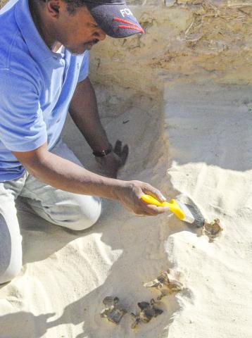 '티스 알 가다' 현장에서 포유류 화석을 발굴하는 모습. CREDIT : Palaeodeserts Project (Michael Petraglia)