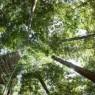 이산화탄 농도 높아지면 식물도 '배신'