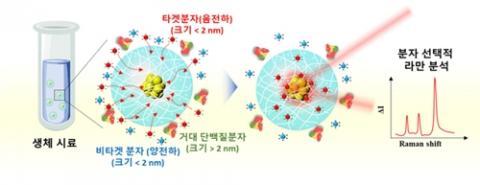 시료 전처리 없이 분자 선택적 라만 분석을 할 수 있는 하이드로젤 기반 라만 센서 원리 설명도 ⓒ KAIST 제공