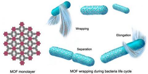 MOF를 박테리아에 코팅하여 유용한 문질을 만들 수 있다 ⓒ Berkeley.edu