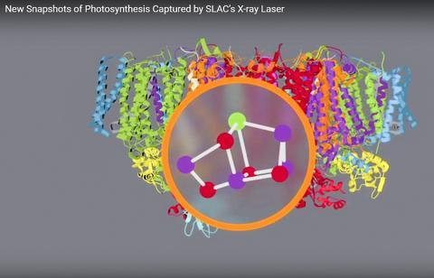 분자 및 원자 수준에서 그린 광화학계(photosystem) II 모습. CREDIT: SLAC National Accelerator Laboratory