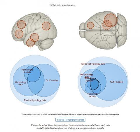 Allen Brain Atlas(http://celltypes.brain-map.org/)에 실린 Venn 다아이그램. 마우스를 움직이면각 모델과 데이터에 따른 뇌세포 정보를 보여준다.   Credit: Allen Brain Atlas