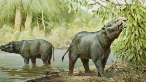 아프리카 대형초식동물의 멸종은 고대 인류의 영향 때문이 아니라 기후와 환경변화에 따른 것이라는 연구를 설명하는 비디오.  CREDIT:  Lisa Potter / University of Utah