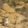 브라질 북부, 2억개의 흰개미 언덕 발견