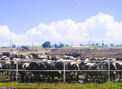 미국 콜로라도주의 소 사육장. 소들이 내뿜는 메탄가스가 온실가스의 상당 부분을 차지한다.  Credit: Wikimedia Commons / Cattle_Feedlot_near_Rocky_Ford
