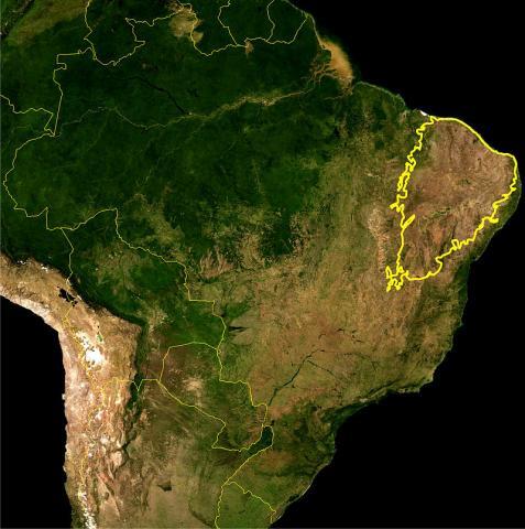 카팅가 관목지대 ⓒ 위키피디아