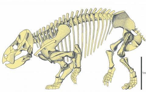 2억5190만 년 전부터 2억130만 년 전까지 트리아스기에 오래 동안 살아남았던 공룡을 닮은 초식동물 '리조비키아 보야니' 화석. 거대해 몸무게가 9톤에 달할 것으로 추정되고 있다.   ⓒTomasz Sulej