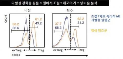 염증성 도움 T세포 가소성 증가 설명 그래프 ⓒ IBS 제공