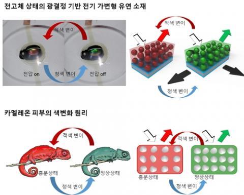 카멜레온 피부 색 변화 원리를 모사한 전고체 상태의 광결정 기반 전기 가변형 유연 소재 ⓒ 한국연구재단 제공