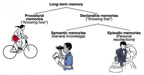 장기 기억은 선언적 기억과 절차적 기억으로 구분된다