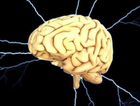 두뇌의 크기가 지적 능력에 얼마나 영향을 미칠까? ⓒ Pixabay