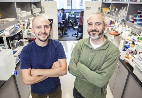 연구를 수행한 스크립스 연구소(캘리포니아 캠퍼스)의 가브리엘 랜더 교수(오른쪽)와 안드레스 에르난데즈 박사. CREDIT : Scripps Research