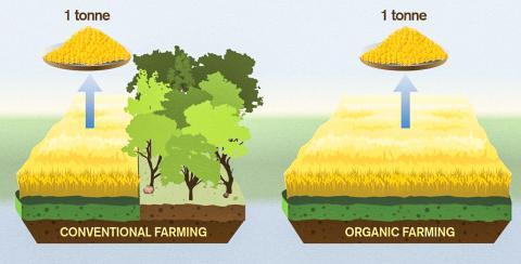 유기농에서 단위면적 당 수확량은 크게 낮은 반면 유기농 재배를 늘리기 위한 삼림 벌채로 이산환탄소 간접 배출량은 훨씬 크다는 연구 결과가 나왔다. 유기농법에서 화석에너지를 덜 사용하기 때문에 직접 배출량은 적으나, 전반적인 기후변화에 미치는 영향은 재래농법보다 확실히 크다는 것이다.  CREDIT : Yen Strandqvist/Chalmers University of Technology