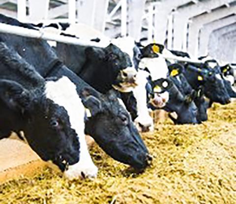 농업부문에서 배출되는 메탄과 아산화질소는 현재 인간활동으로 나오는 온실가스 배출량의 10~12%를 차지하며, 쇠고기와 낙농업은 농업부문 총 감축 잠재력의 3분의2 이상을 기여할 수 있는 것으로 조사됐다.  ⓒ Grigorenko | Dreamstime.com