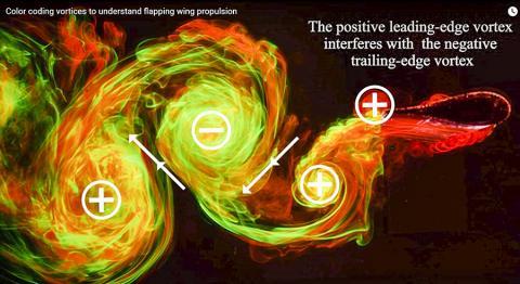 앞 날개 선단의 와류가 후연에 미치는 영향을 표시한 그림. 동영상 캡처. Credit: NYU's Applied Math Lab
