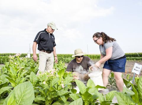 연구를 이끈 돈 오트(왼쪽) 교수와 폴 사우스(중앙), 아만다 카바나그 박사(오른쪽)가 광호흡 경로를 개조한 식물들이 자라는 모습을 살펴보고 있다. 이들은 '광호흡 지름길'을 이용한 개조 작물이 40% 더 생산적이라는 사실을 발견했다.  Credit: Claire Benjamin/RIPE Project