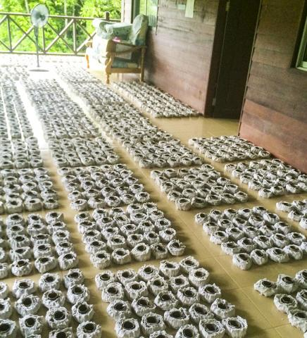 흰개미 억제 구역에 갖다 놓기 전에 건조 처리되는 화장실용 두루말이 휴지. 이번 연구에는 4000개의 말이 휴지가 사용됐다.  CREDIT : @The University of Hong Kong