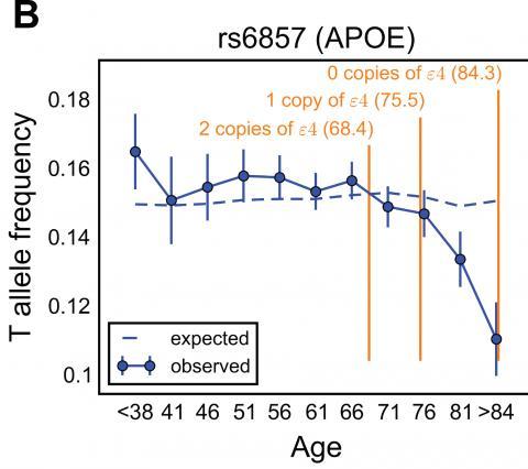 APOE4 유전자와 수명 사이의 관계 ⓒ Hakhamanesh Mostafavi