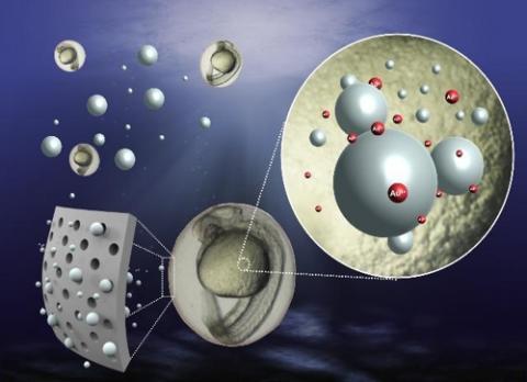 초미세 플라스틱의 제브라피쉬 배아 흡수 과정에 대한 모식도 ⓒ 한국생명공학연구원 제공
