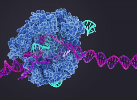 유전자가위를 활용한 영장류 실험이 중국에서 대량 시도되고 있는 가운데 미중 간의 패권 경쟁 구도 하에서 생명윤리 논쟁이 뜨겁게 전개되고 있다.  ⓒbiosciences.lbl.gov