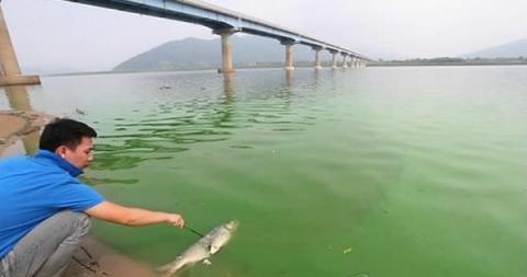 낙동강 하류를 오염시켰던 녹조 사태 ⓒ 연합뉴스
