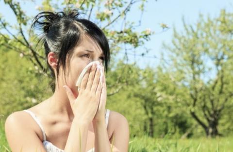 비염은 반려동물에 의한 알러지 중에서도 가장 흔한 증상으로 알려져 있다 ⓒ AAFA