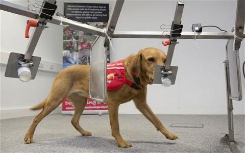 개가 암 환자를 식별할 수 있는 표지자로 휘발성유기화합물이 부각되고 있다 ⓒ lifewithdogs.tv