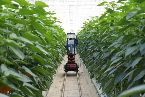 LED 식물개발자는 LED 조명과 IT를 활용해 계절에 상관없이 고부가치 농산물을 생산할 수있도록 세부계획을 세우고 시스템을 설계하는 일을 한다. ⓒ pixabay