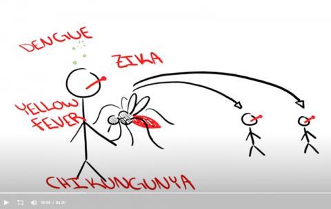 모기가 옮기는 각종 질병들. 연구 요약 비디오 캡처.  CREDIT: Duvall et al./Cell