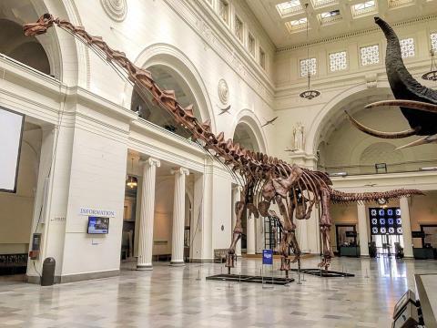 백악기 남아메리카에서 번성했던 것으로 알려진 거대 초식공룡 티타노사우스르스와 유사한 새로운 공룡들이 아프리카에서 발견된   '므냐마왐투카'란 이름이 붙여졌 ⓒWikipedia