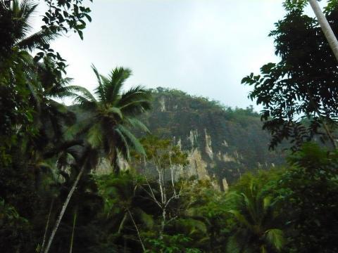 스리랑카 밀림 속에 있는 파-히엔 레나(Fa-Hien Lena) 동굴에서 발굴한 1400개 포유류 화석을 통 ⓒWikipedia