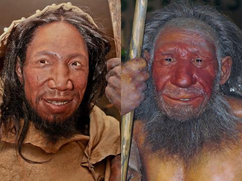 호모사피엔스(왼쪽)과 네안데르탈인의 얼굴 비교 ⓒ 위키피디아