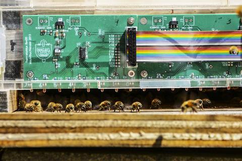 연구팀은 꿀벌이 둥지를 식히는 방법을 알아내기 위해 둥지 안팎의 공기 흐름과 둥지 입구의 꿀벌 위치와 밀집도를 측정했다.  Image courtesy of Jacob Peters/Harvard SEAS