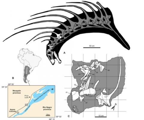 목에 날카로운 가시가 2줄로 나 있는 초식공룡의 화석이 아르헨티나에서 발견됐다.  ⓒ 연합뉴스