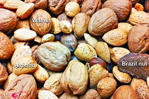 나무 견과류가 2형 당뇨환자의 심장병 위험을 줄인다는 연구가 나왔다. 각종 너트류 사진.  Credit: Wikimedia Commons / Kazvorpal