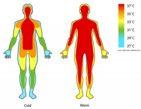 말단 부위와 신체 내 장기의 온도는 차이가 난다 ⓒ guff.com