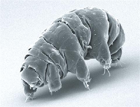 물곰 현미경 사진