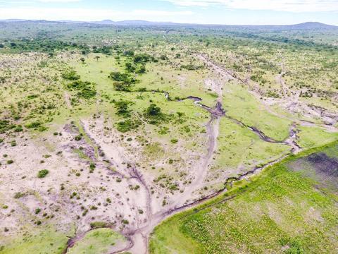 동물들이 먹이사냥을 하는 마스와(Maswa) 보호구역과 탄자니아 바리아디 마을 토지 사이의 경계 지역이 인간 활동의 영향으로 피해를 입은 모습.  CREDIT: Michiel Veldhuis, University of Groningen