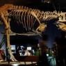 역대 가장 큰 티라노사우르스 발견