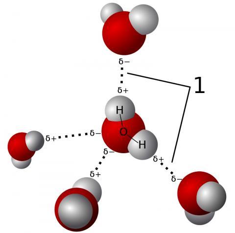 물 분자가 거미줄 단백질 MaSp2와 상호작용할 때 그 수소결합을 불규칙하게 방해해 회전을 일으키는 것으로 밝혀졌다. 그림은 물 분자 사이의 수소결합 모델. Credit: Wikimedia Commons