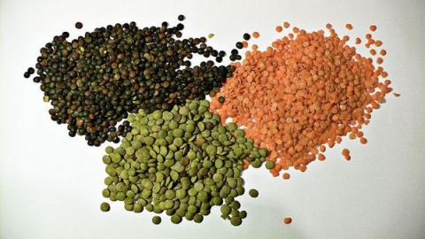 다양한 색상으로 이루어진 렌즈콩. 국내에서는 렌틸콩으로 더 많이 알려져 있다 ⓒ wikipedia
