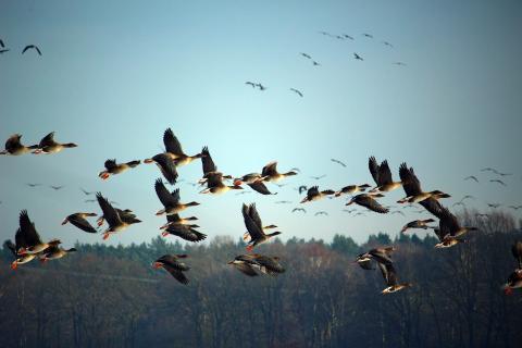 최근 북아메리카에서 가장 중요한 철새 서식지 중 하나인 그레이트베이슨이 위험에 처해 있다는 연구결과가 '사이언피틱 리포트'지에 발표됐다. ⓒ Public Domain