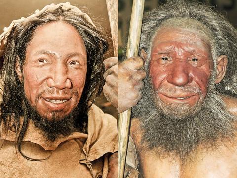 독일 메트만의 '네안데르탈 박물관'에 복원 전시된 초기 유럽의 호모사피엔스(왼쪽)와 네안데르탈인(오른쪽) 모습. 얼굴은 법의학적 지식을 바탕으로 재건했다. 네안데르탈인은 호모사피엔스에 비해 이마가 약간 좁고 눈 위 뼈가 두드러졌으며, 입이 약간 큰 모습이다.  CREDIT: Wikimedia / Daniela Hitzemann