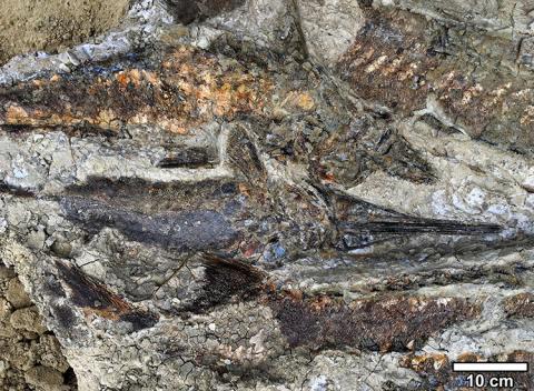 공포의 장면을 보여주듯 물고기의 잔해가 선명한 화석무덤. ⓒ Depalma